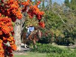 hacienda-cantalagua-hotel-and-country-club-Hacienda-Cantalagua-Hotel-Horseback-Riding.jpg
